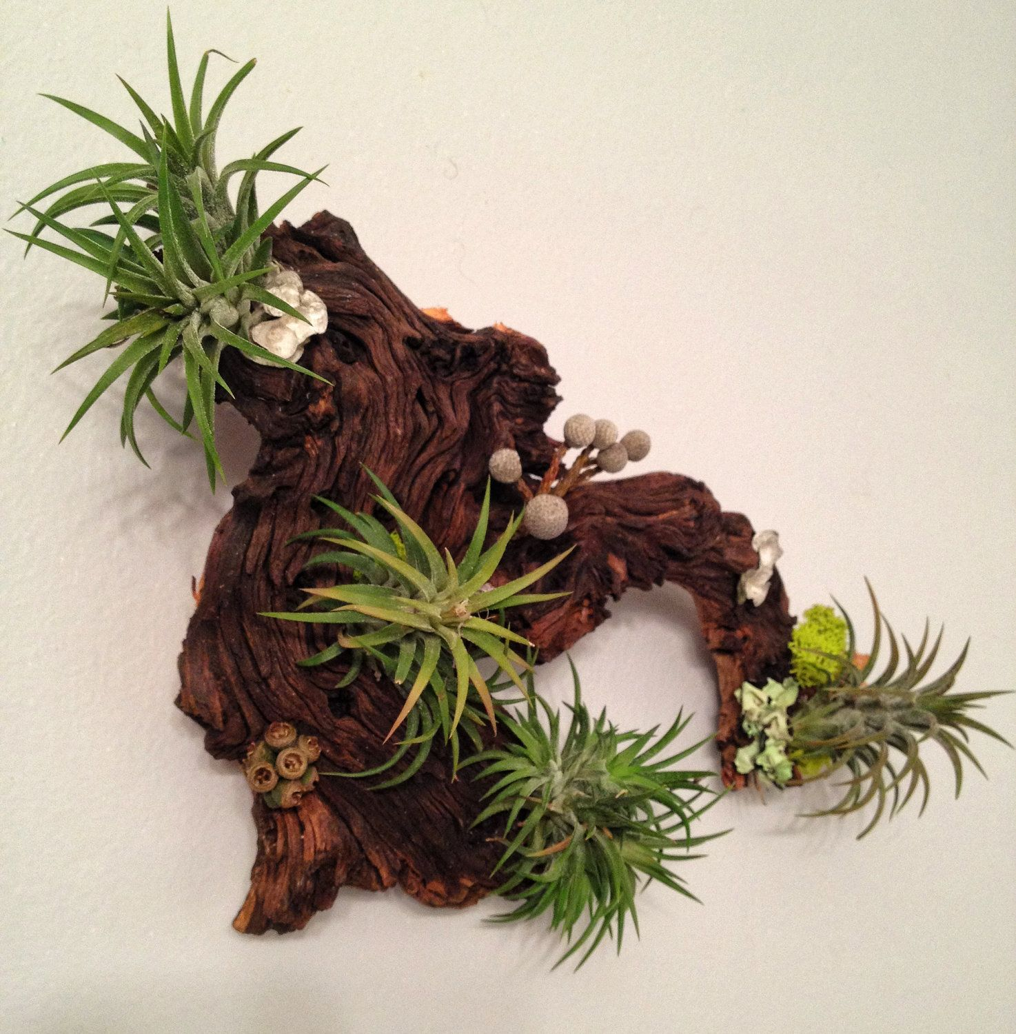 Gartenmuscheln Air Plants And Moss Wall Garden Living Wall By