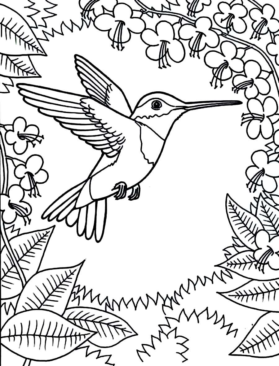 Printable hummingbird coloring pages free online printable coloring pages sheets for kids get the latest free printable hummingbird coloring pages images