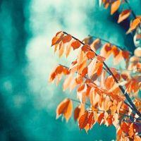 Teal Orange Photography - turquoise coral aqua nature ...