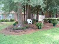 Landscaping under large pine trees | Gardening | Pinterest ...