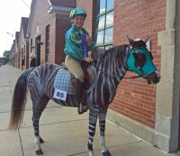 horse-racing-stripes-costume | Costumes for Horses ...