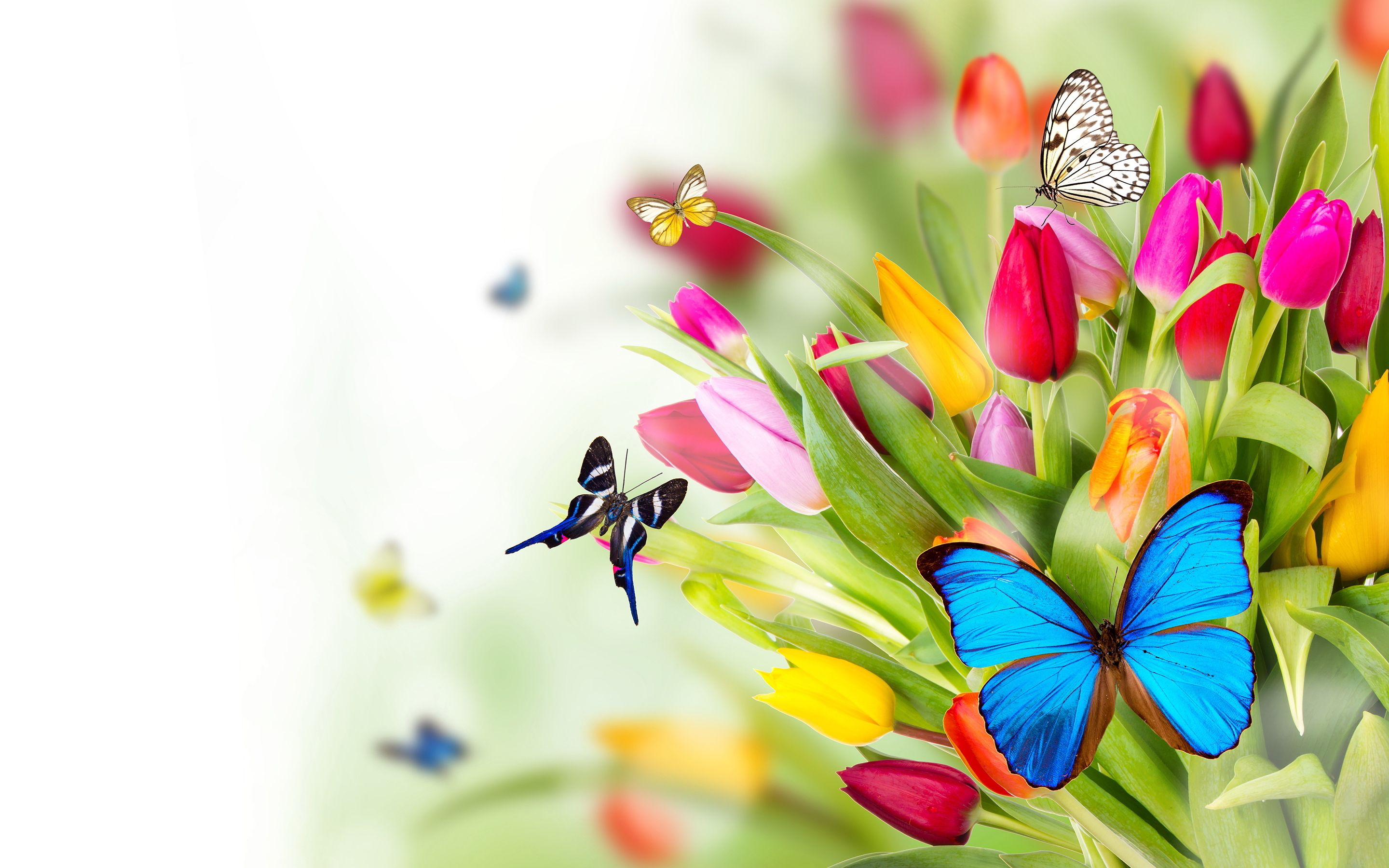 Beautiful Pictures Of Flowers And Butterflies Birds Flowers Butterflies Wallpapers Pictures Photos Images