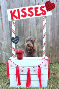 Kissing Booth for Dogs   Valentine's Day   Pinterest   Dog ...