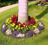 colorful landscaping | Colorful Tree Base Landscaping ...