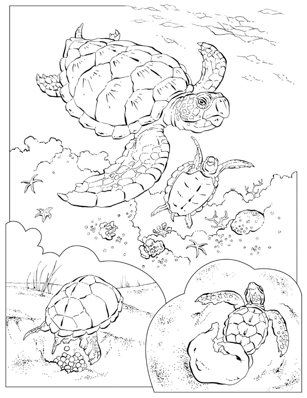 Green sea turtle coloring pages on national geographic com