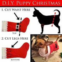 Quick dog Christmas outfit :) | Dogify | Pinterest | Dog ...