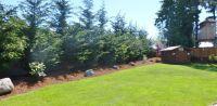 pine trees for backyard landscaping | Strigenz backyard ...