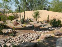 Desert Landscaping here in AZ can be so stunning ...