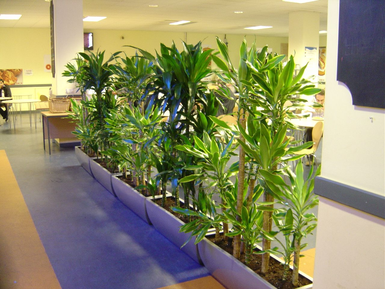 Plant Interior Office Plants Interior Plant Displays Fourth Floor