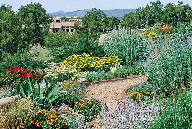 A colorful Xeriscape garden design by Susan Blake of Santa Fe, New - drought tolerant garden designs