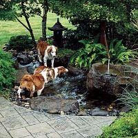 Best 25+ Dog friendly backyard ideas on Pinterest | Diy ...