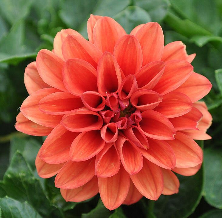 10 Best Images About Favorite Orange Flowers-Mallory Wedding On