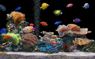 Download Live Hd Wallpaper Fish Aquarium 3d Desktop Aquarium 3d | Best Games Wallpapers ...