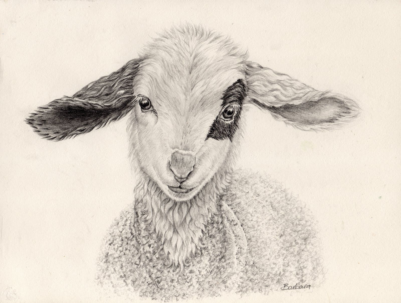 Baby Lamb Drawing Sketching In Nature Happy Easter Animalux Pinterest