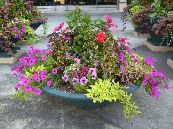 30 Unique Garden Design Ideas Tall plants, Plants and Gardens - container garden design ideas