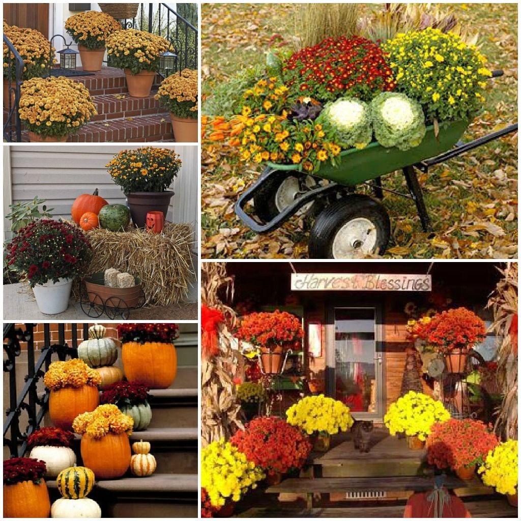 Outdoor fall decorations ve been looking up fall decor ideas using chrysanthemums since