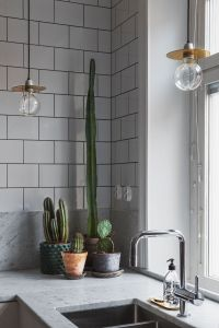 Indoor Plants | A cacti cluster on the kitchen counter for ...