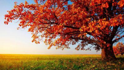 High Resolution Nature Desktop HD Wallpaper Widescreen Free   wallpapers   Pinterest   Wallpaper ...