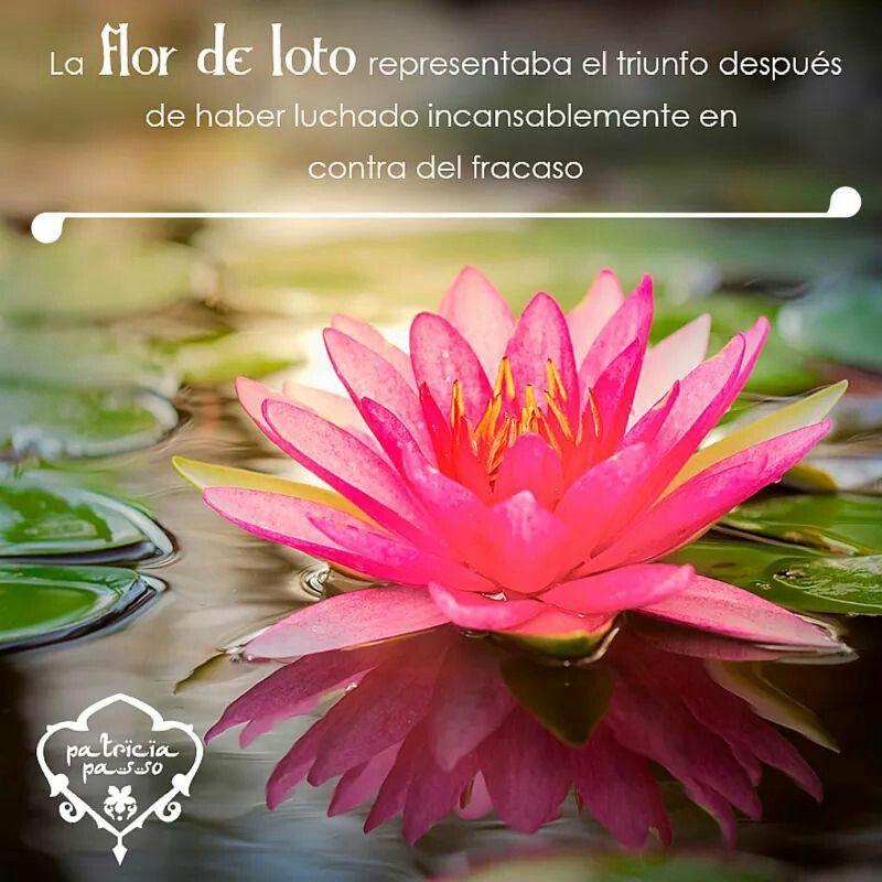 Pinterest Desktop Wallpaper Lotus Quote La Flor De Loto Frases Clave Pinterest Yoga Namaste