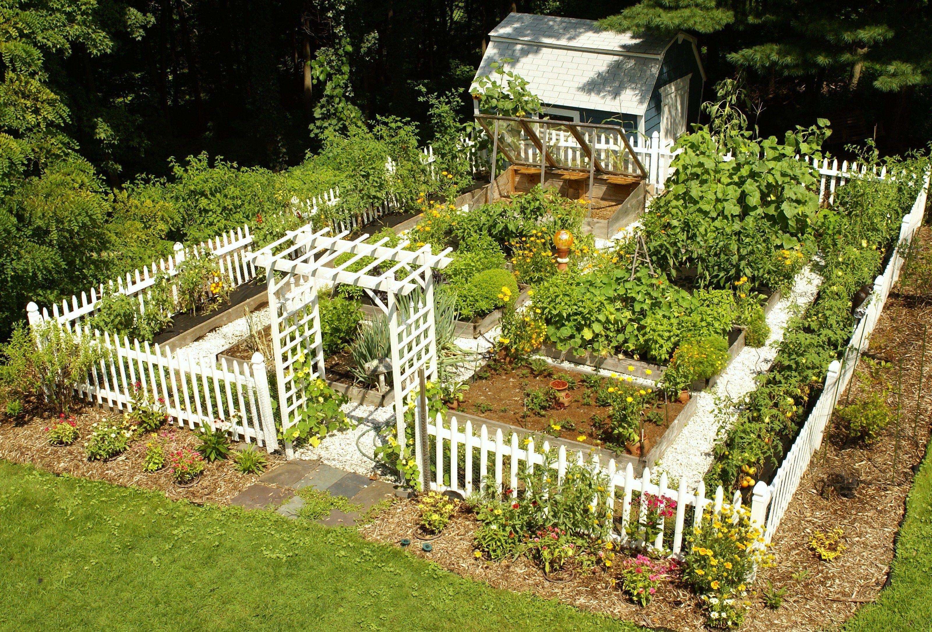 Мой огород своими руками фото