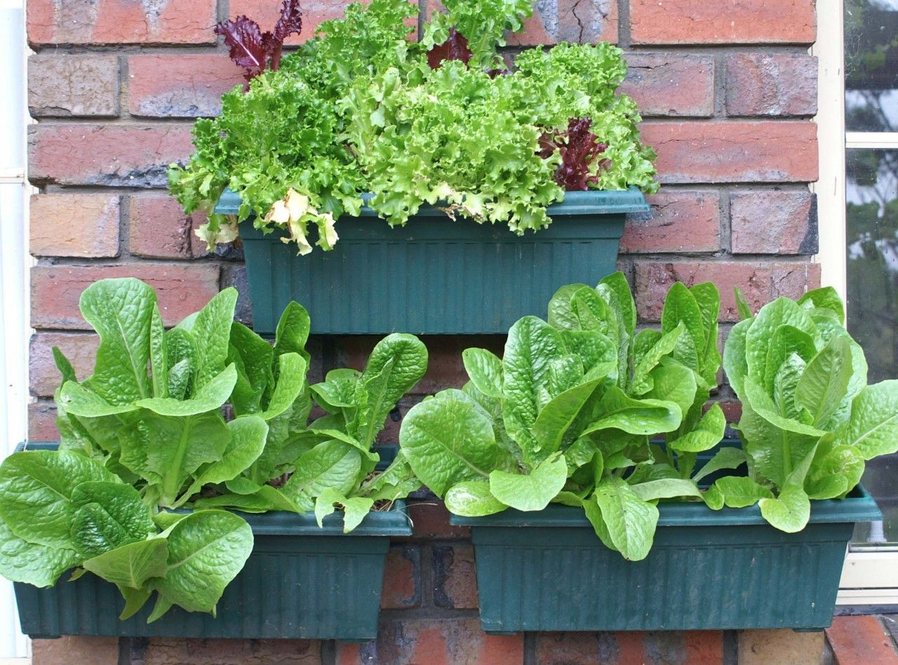 Wall Planter Hooks Hang Pots On Your Brick Wall With This No Drill Solution