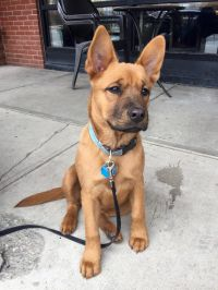 This little guy looks like a young Scooby-Doo http://ift ...