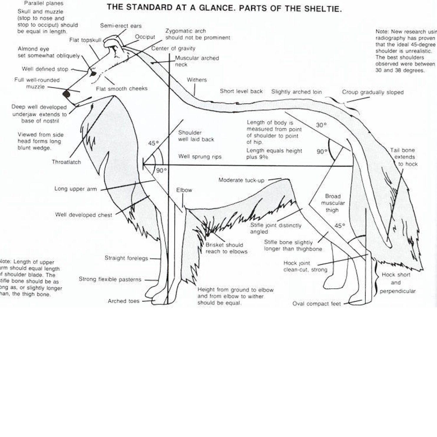 rat skeletal system illustration with parts