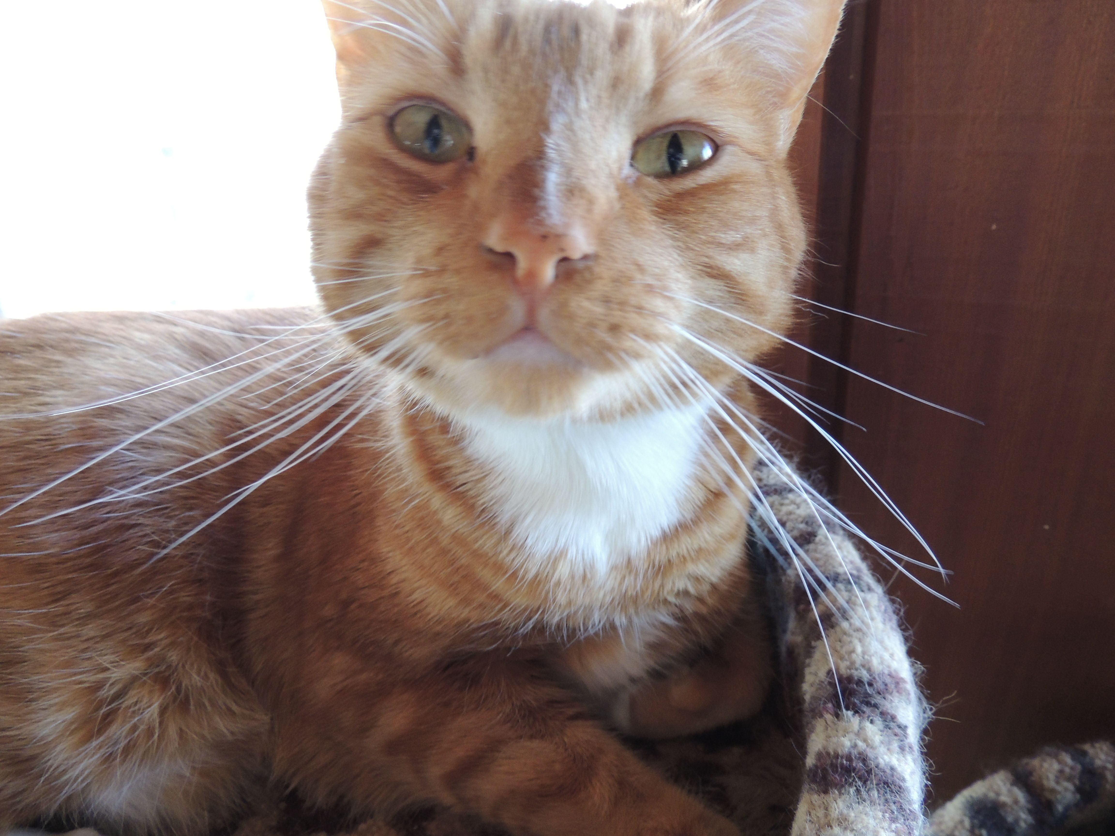 Orange soft paws are the perfect harmony for marmalade cats like luke here