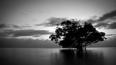 Black And White Nature Photography Hd Background Wallpaper 18 HD Wallpapers | Photography ...