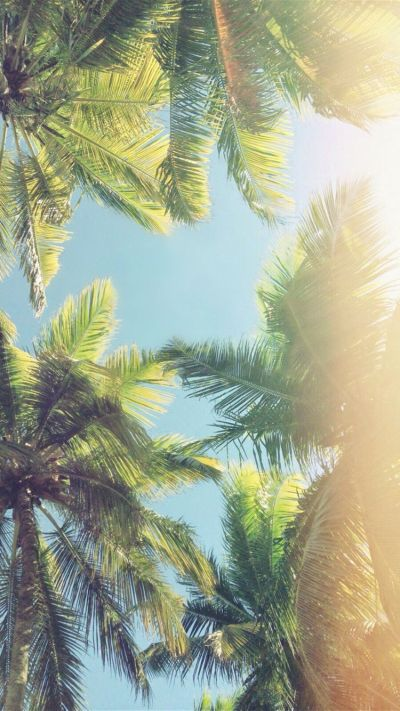Palm trees iPhone wallpaper | Iphone wallpapers ...