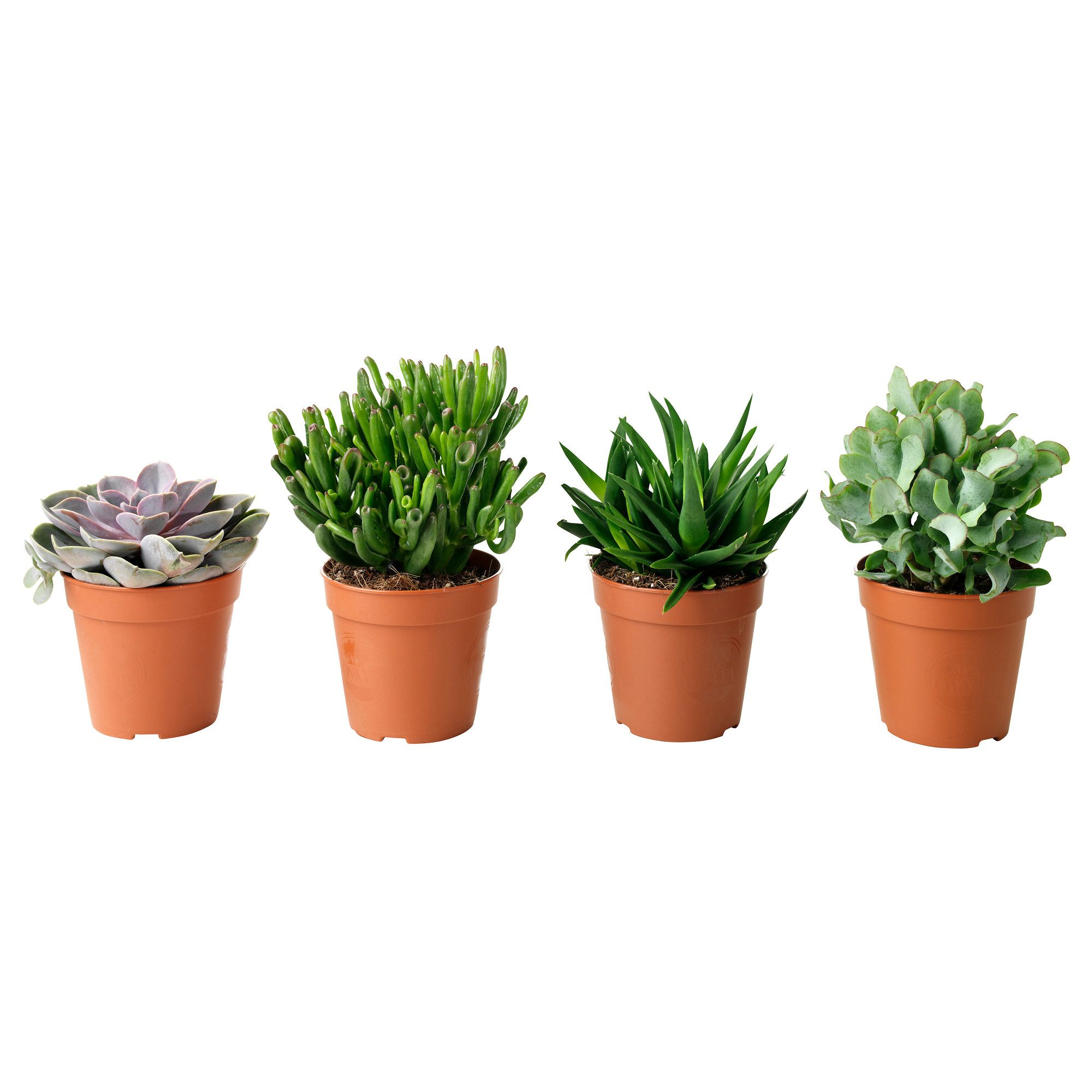 Small Household Plants Succulent Potted Plant Ikea Wedding Pinterest