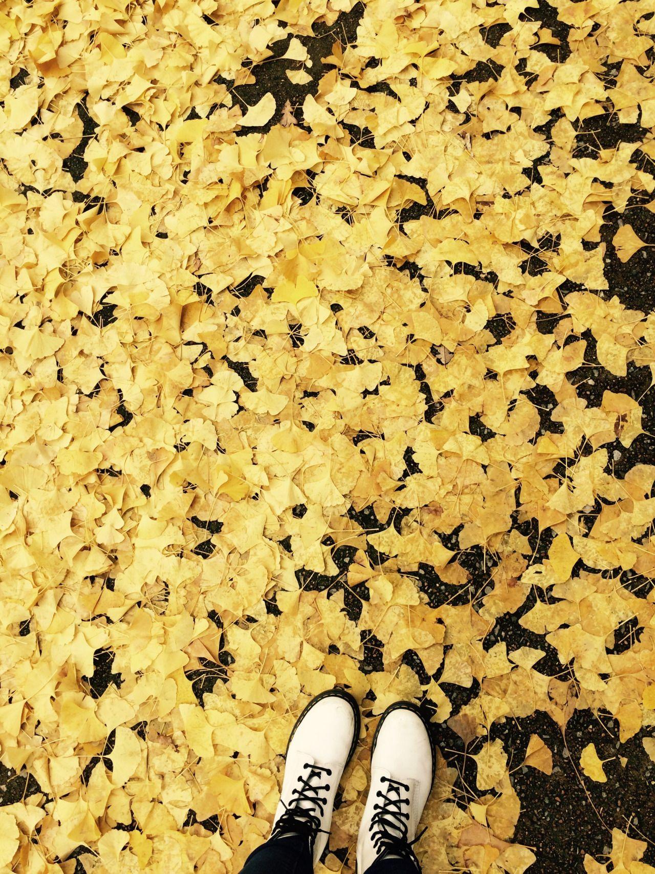 Fall Sunflowers Wallpaper Yellow Aesthetic Tumblr Hufflepuff Aesthetic