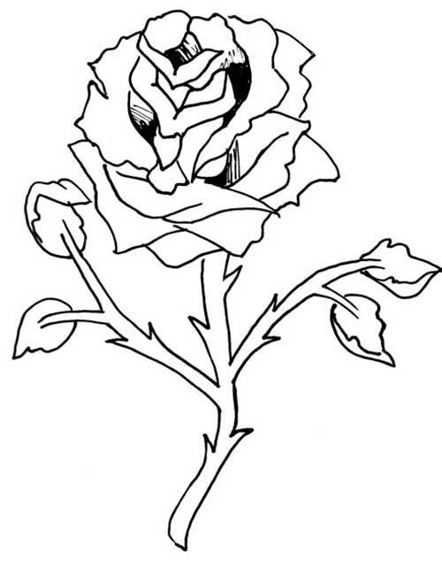 Imagenes De Flores Para Pintar Simple Flor En Maceta Para - Auto ...