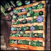 pallet living wall!