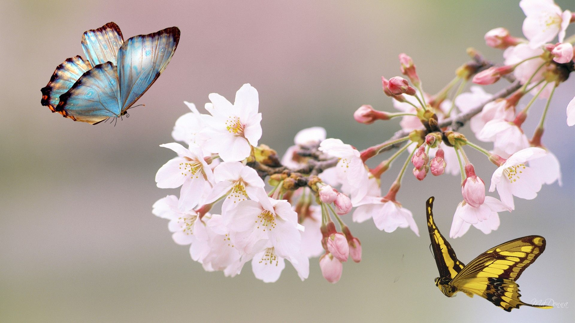 Beautiful Pictures Of Flowers And Butterflies Birds 53 Flowers And Butterflies Pictures Images Wallpapers