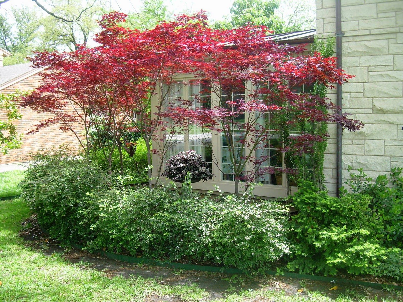 Dwarf ornamental trees and interesting small ornamental trees available in our area