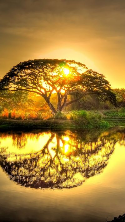 #Sunset pond with tree #reflection. http://wallpaperscraft.com/download/sunset_pond_trees ...