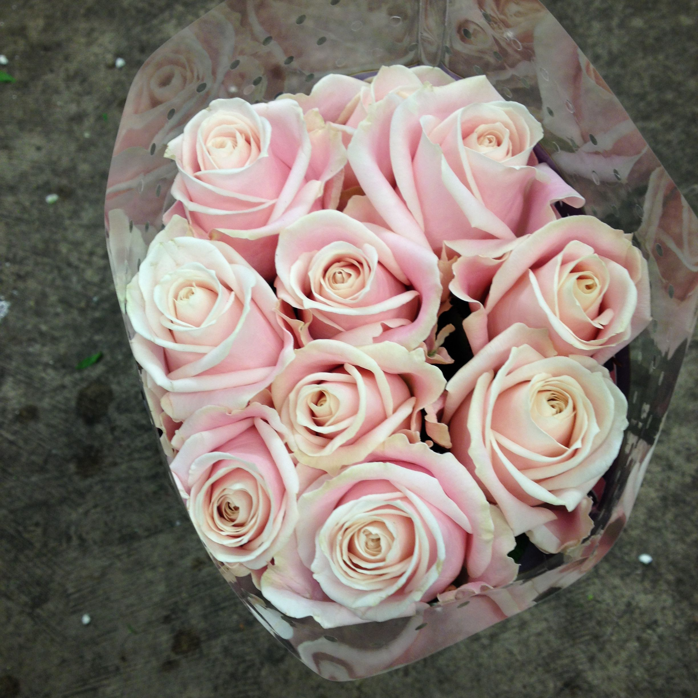 Pale pink rose called sweet avalanche sold in bunches of 20 stems from the