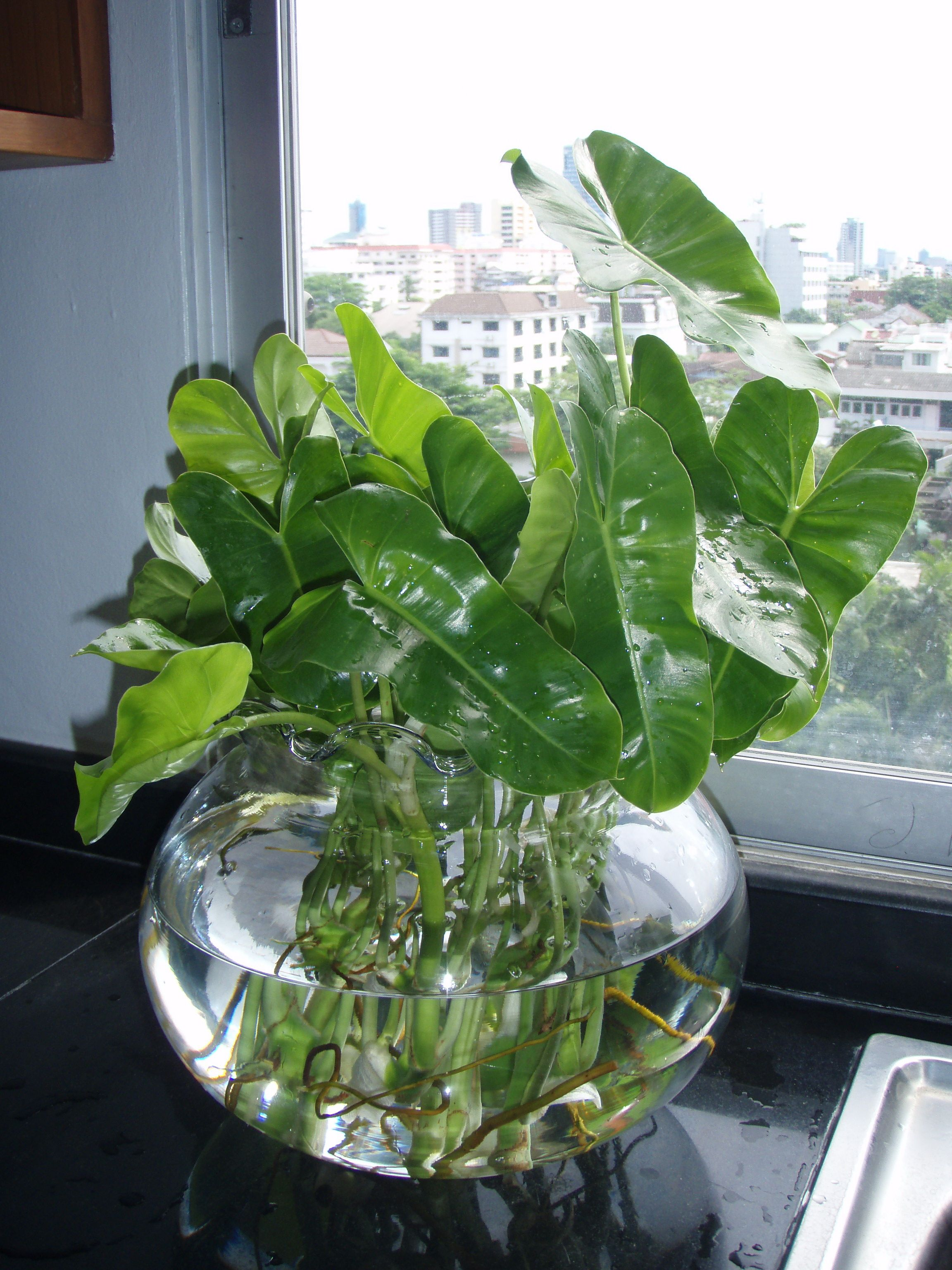 Tropical Foliage Indoor Plants Gwak Nguen Tropical Creeping And Foliage Plants Large