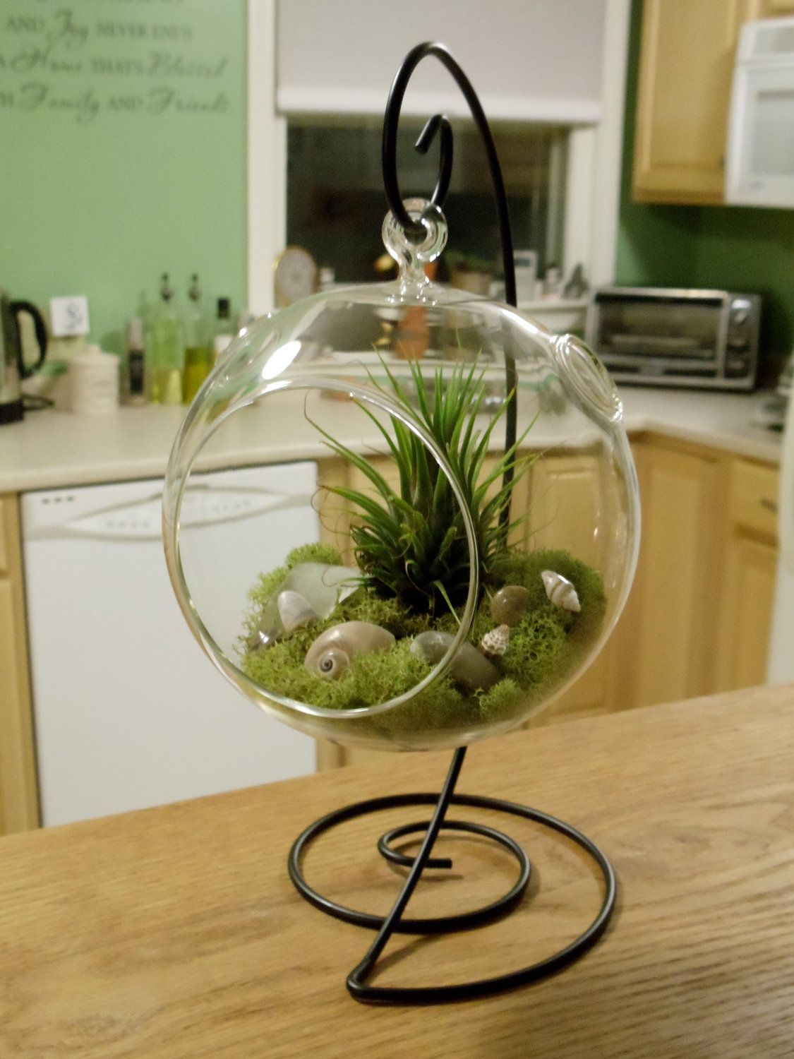Diy Terrarium Stand Air Plants Air Plant Terrarium With Decorative Stand By