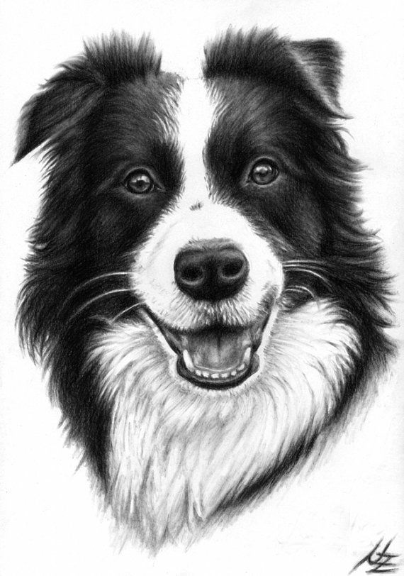 ... Border Collie Portrait Kunstdruck A3 Von ArtsandDogs Auf Etsy   Bordre  Bad Bilder ...