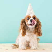 How to Make a Unicorn Costume for Your Dog This Halloween ...