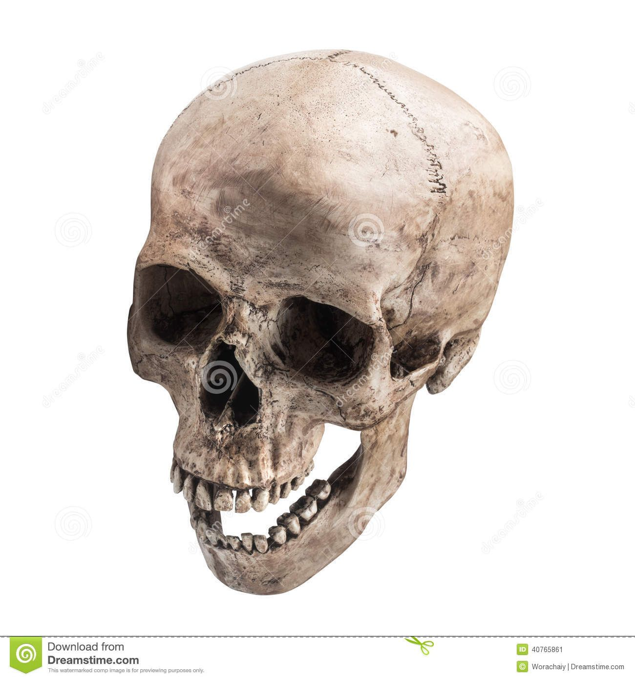 Human Skull Sidetview Human Skull Open Mouth Isolated Sideview White