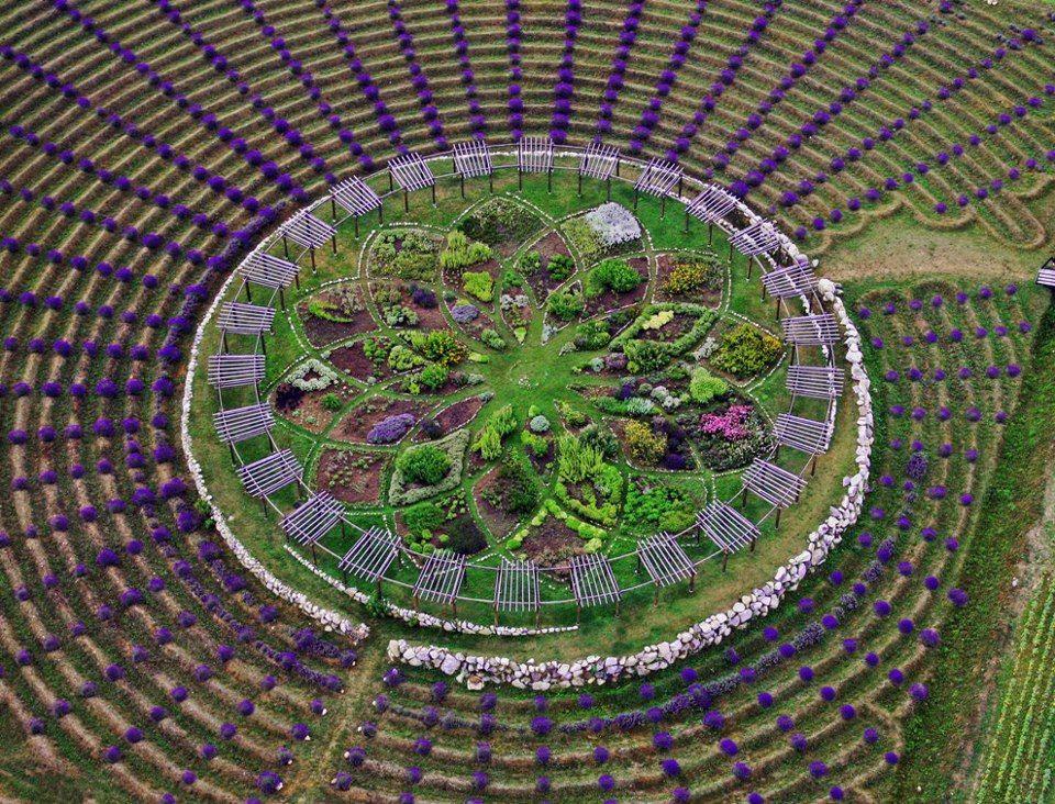 Lavender labyrinth at Cherry Point Farm \ Market in Michigan Can - labyrinth garden design