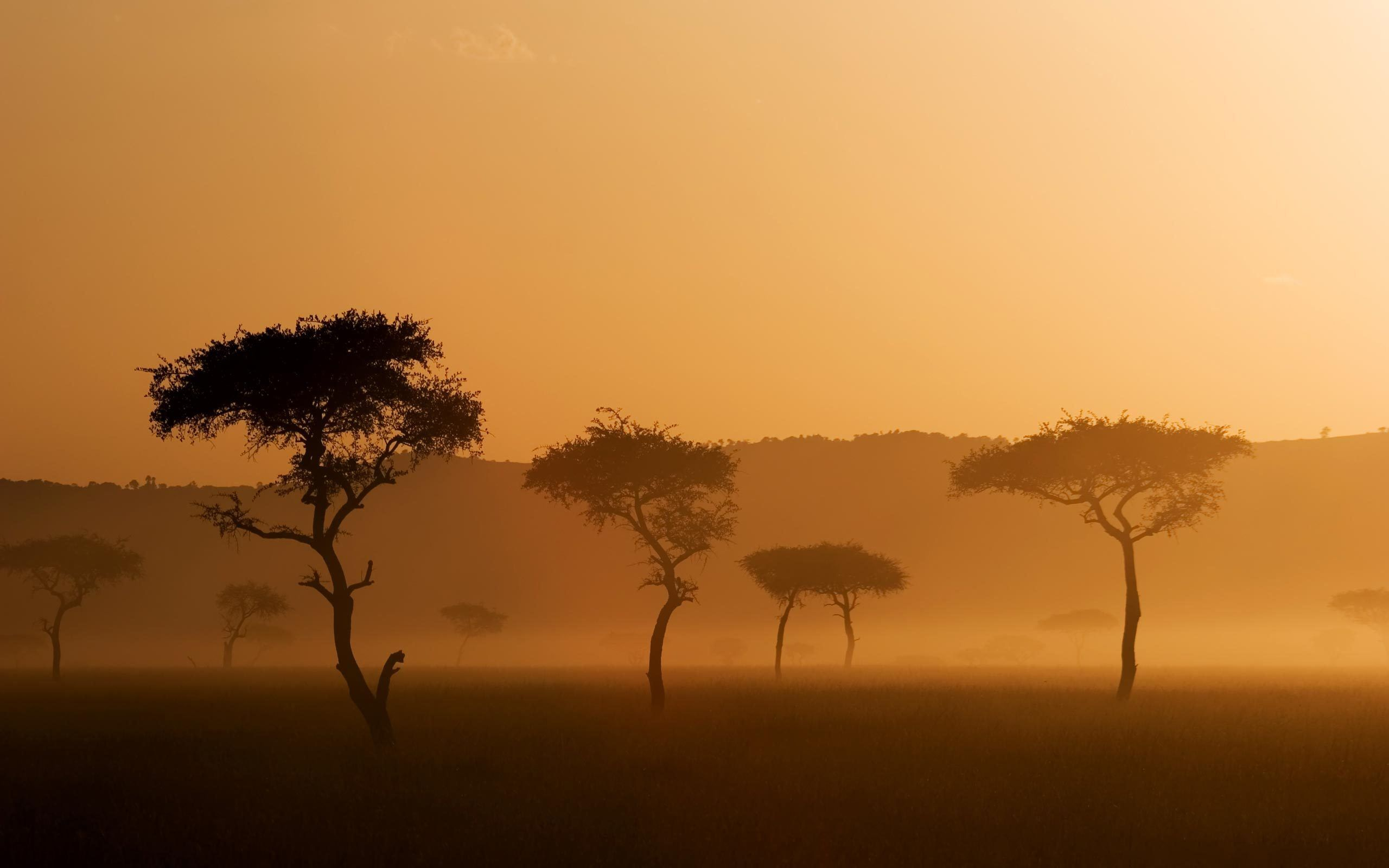 Savana Hd Savannah African Savannah Sunset Jpg 25601600 Biomes