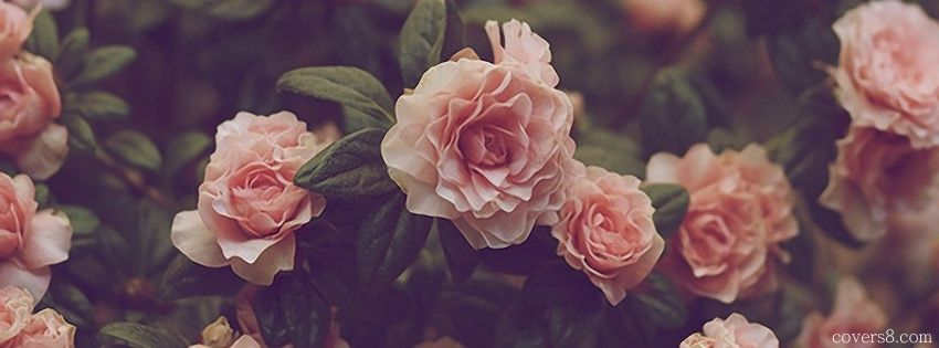 Iphone Wallpaper Quote Maker Vintage Roses Facebook Cover For Timeline Capa