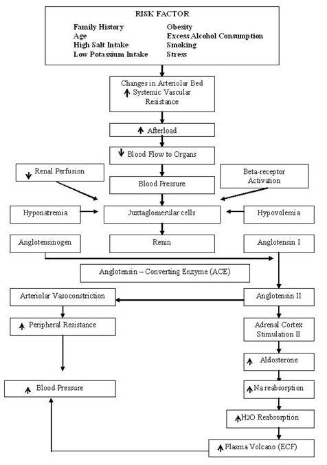 diagram of pyelonephritis