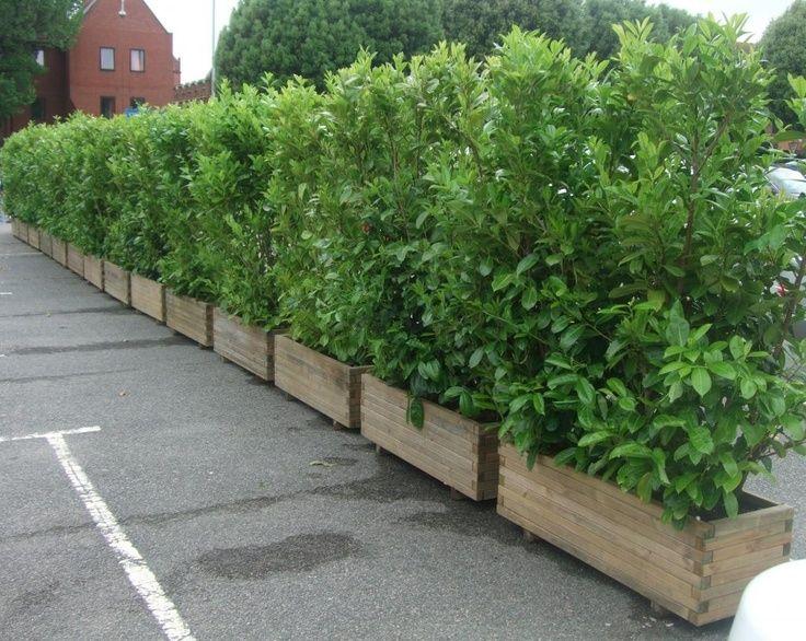 hedge filled pots