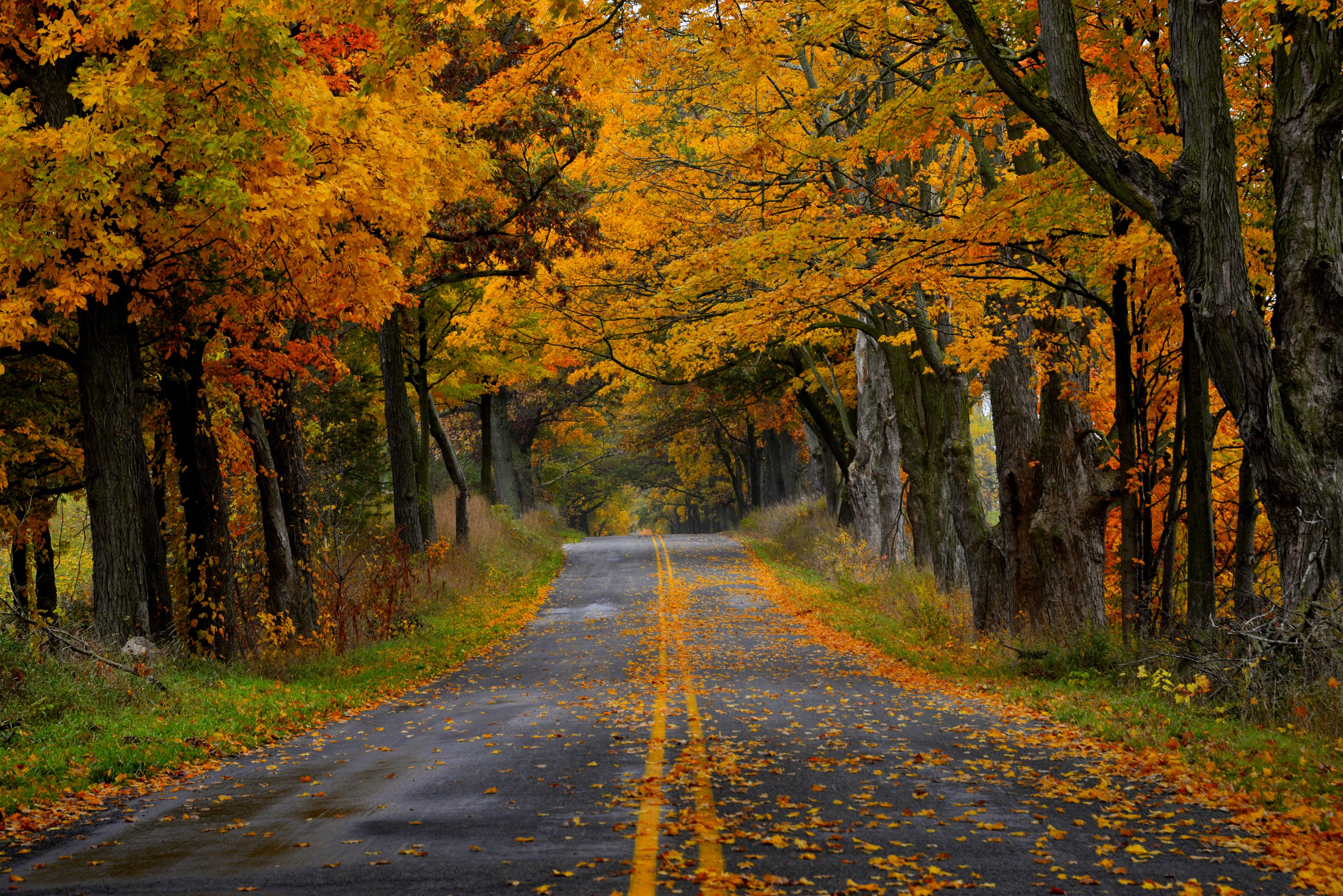 3d Snowy Cottage Animated Wallpaper Free Download Narrow Autumn Road Photos And Wallpapers Pinterest