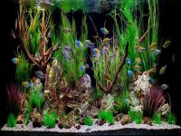 Fish Aquarium Decorations on Pinterest